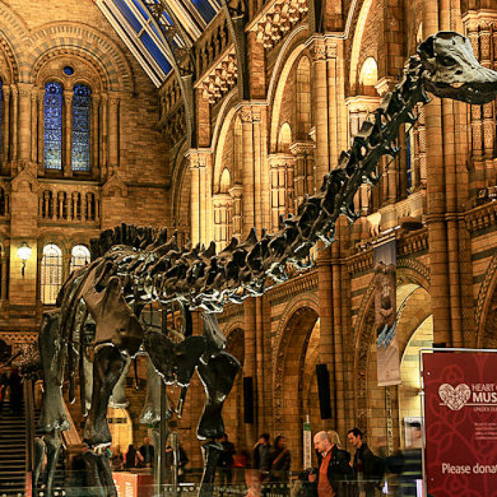 Natural History Museum Excursion